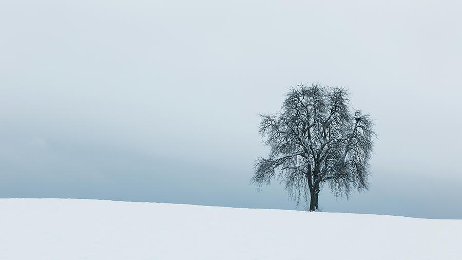 Silence Photograph by Tobias Knoch