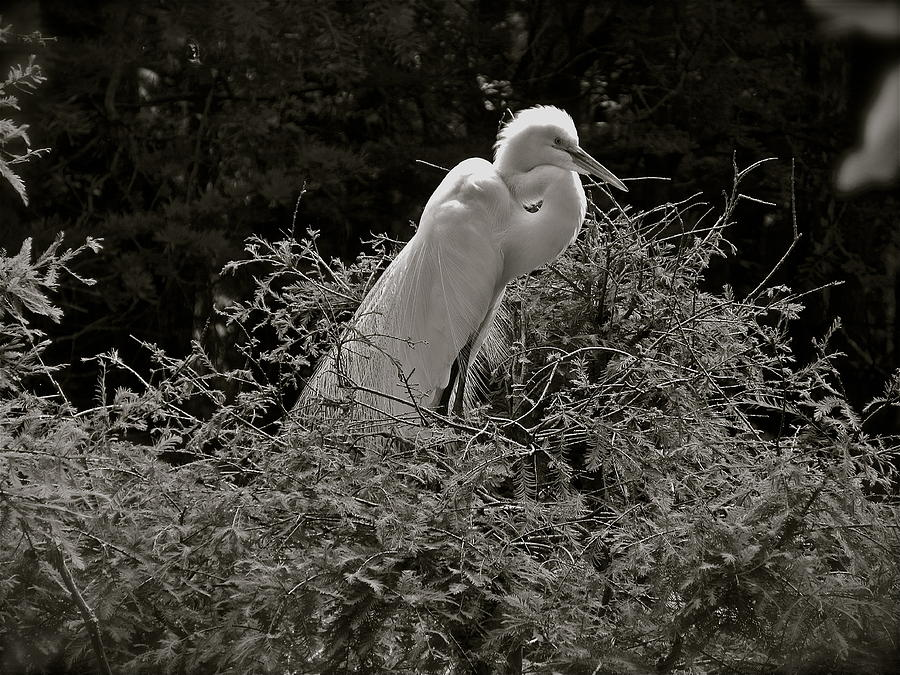 Silent Elegance by Phyllis Dunn