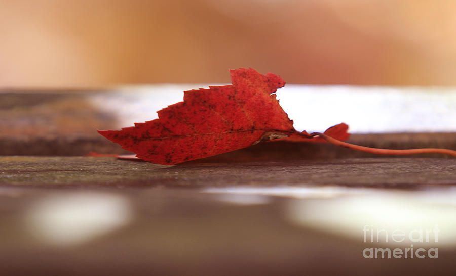 Fall Photograph - Silhouette by Kathy DesJardins