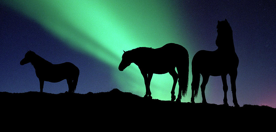 Horizontal Photograph - Silhouette Of Horses At Dusk, Iceland by Animal Images