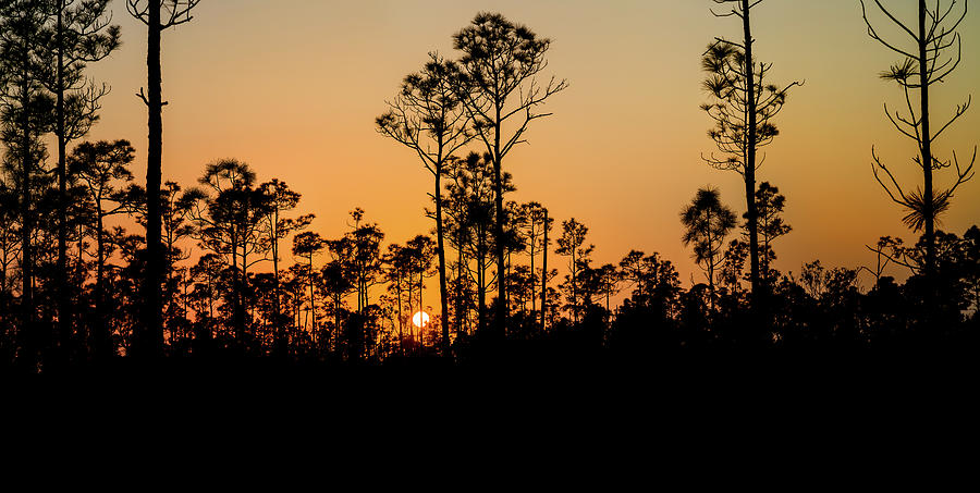 Horizontal Photograph - Silhouette Of Trees At Sunset by Panoramic Images