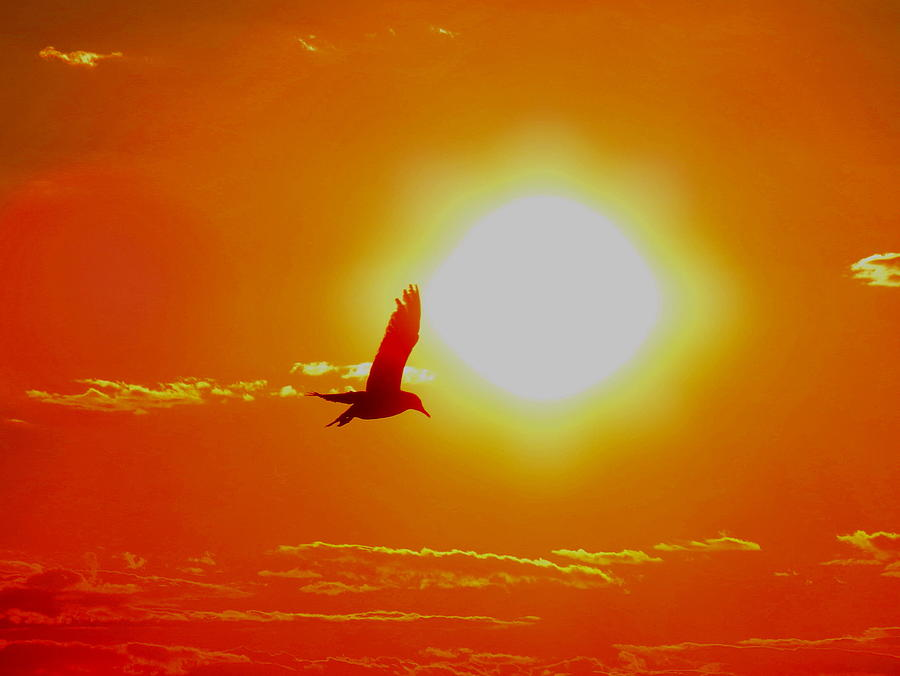 Sun Photograph - Silhouetted Seagull  by Stephen Melcher