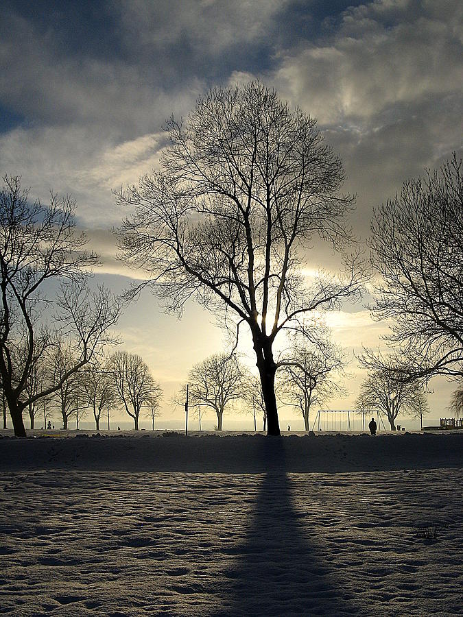 Decor Photograph - Silhouettes and a Long Winter Shadow  by Brian Chase
