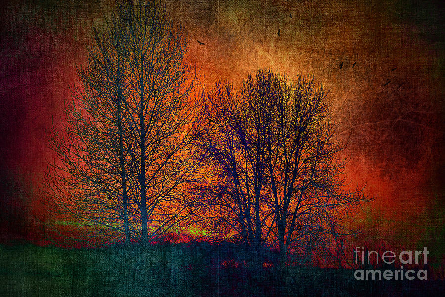 Nature Photograph - Silhouettes by Sylvia Cook