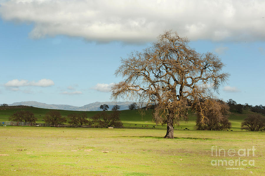 Landscape Photography Photograph - Silicon Valley Hills by Artist and Photographer Laura Wrede