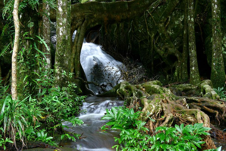 Silky Stream Photograph