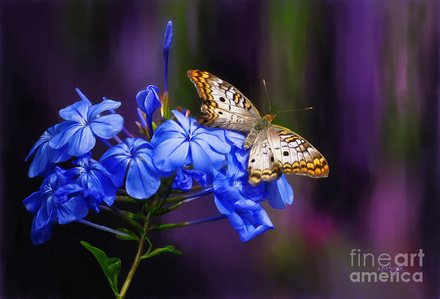 Butterfly Digital Art - Silver And Gold by Lois Bryan