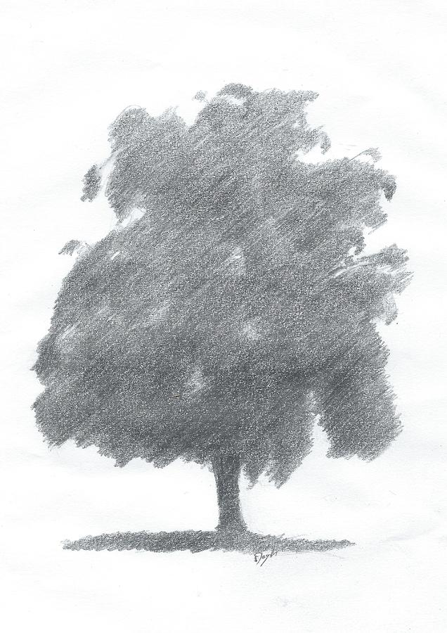 Pencil Drawings Painting - Silver Birch Drawing Number Two by Alan Daysh