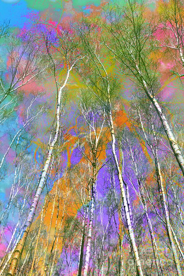 Trees Photograph - Silver Birch by Michelle Orai