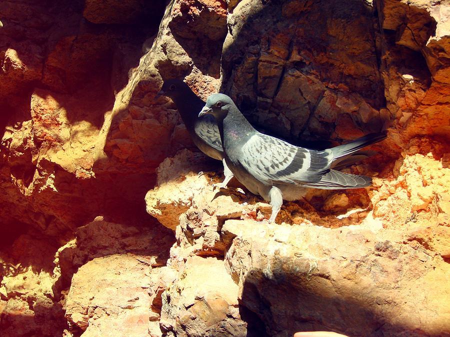 Silver birds by Carol Oufnac Mahan