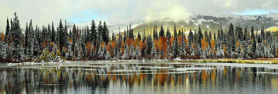 Silver Lake Pine And Aspen Trees Photograph by Utah-based Photographer Ryan Houston