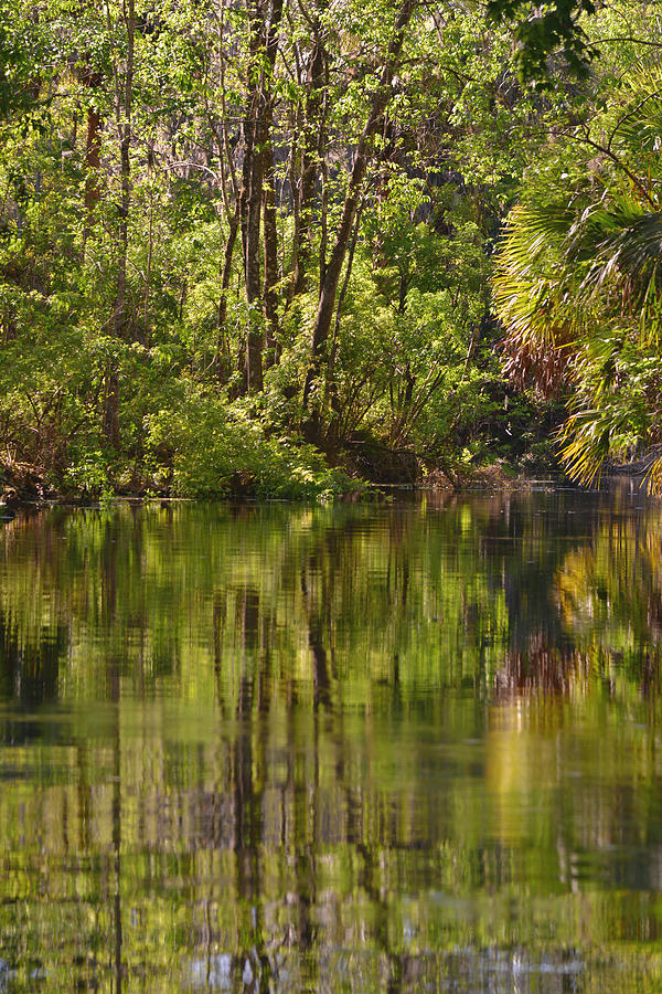 Silver Photograph - Silver Springs Nature Park Florida by Christine Till