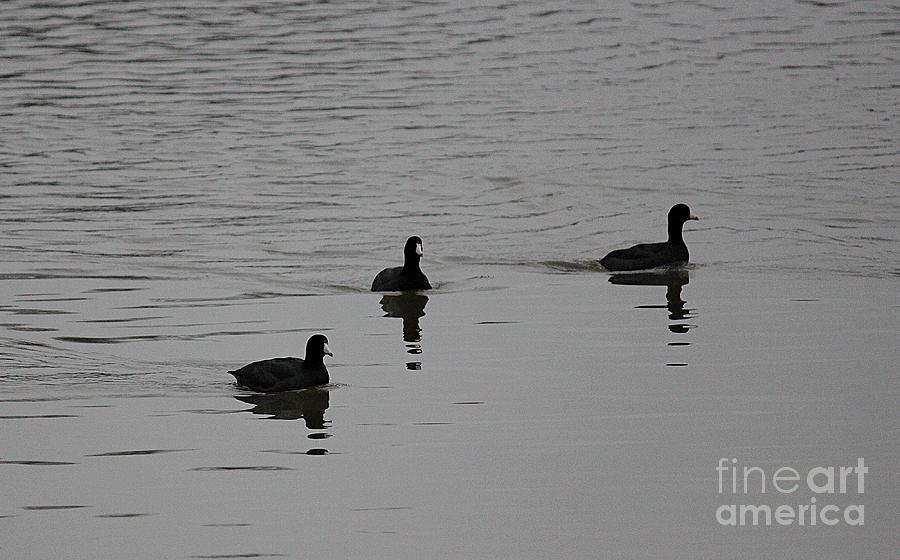 Pond Photograph - Silver Swim by Erica Hanel