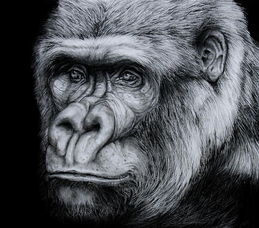 It is a photo of Clever Drawing Of A Gorilla