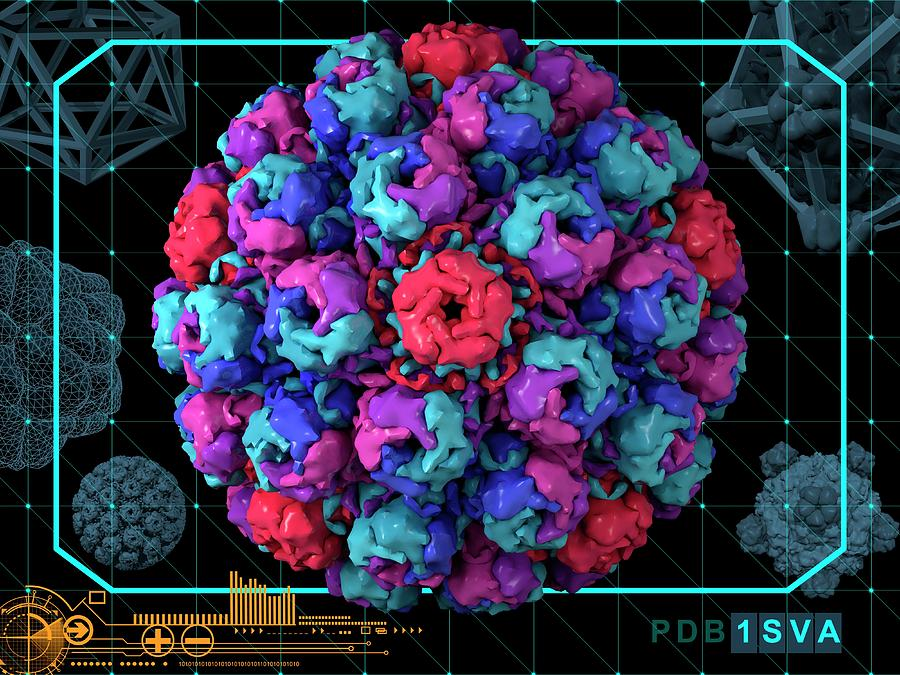 Artwork Photograph - Simian Virus 40 by Laguna Design/science Photo Library