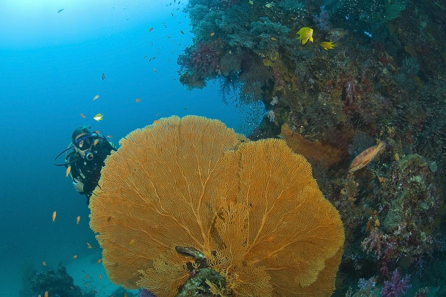 Similan Islands Underwater Park Photograph