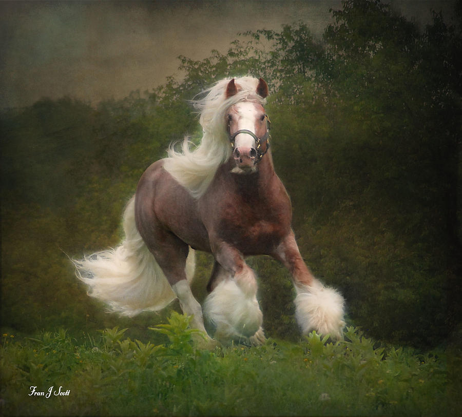 Horses Photograph - Simon And The Storm by Fran J Scott