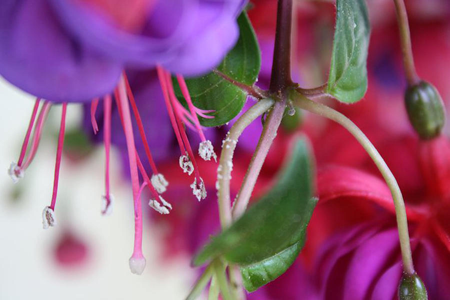 Flower Photograph - Simple Beauty by Maria Schaefers