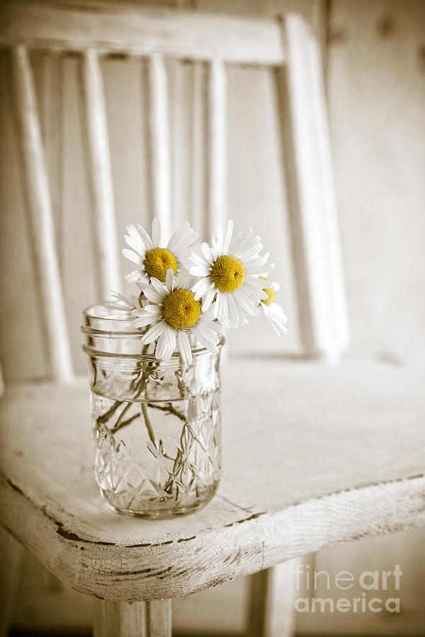 Chair Photograph - Simple White Daisy Flowers by Edward Fielding