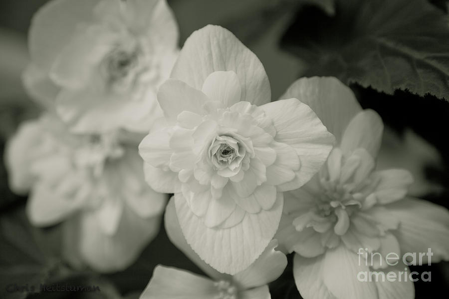 Flower Photograph - Simplicity  by Chris Heitstuman