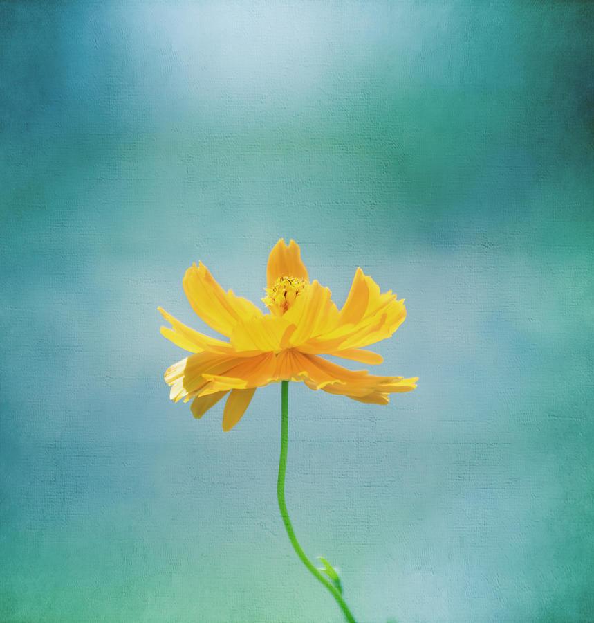 Flower Photograph - Simplicity by Kim Hojnacki