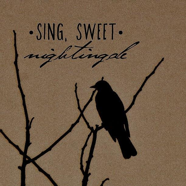 Brown Photograph - Sing, Sweet Nightingale by Traci Beeson