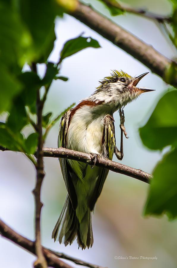 Nature Photograph - Singing A Song Of Joy by Sheen Watkins