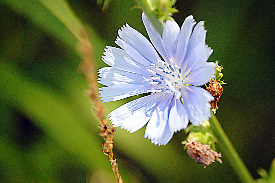 Blue Flower Photograph - Single Blue Flower by Stephanie Grooms