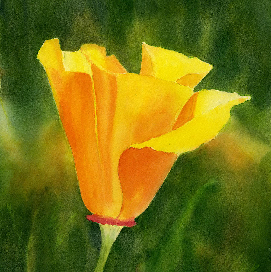Single California Poppy Painting By Sharon Freeman