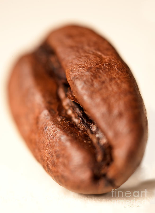 Coffee Bean Photograph -  Coffee Bean by Iris Richardson