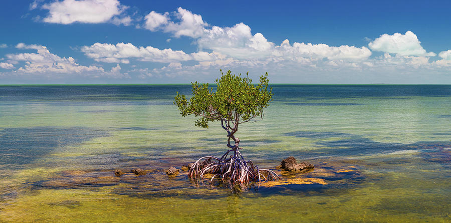 Horizontal Photograph - Single Mangrove Tree In The Gulf by Panoramic Images