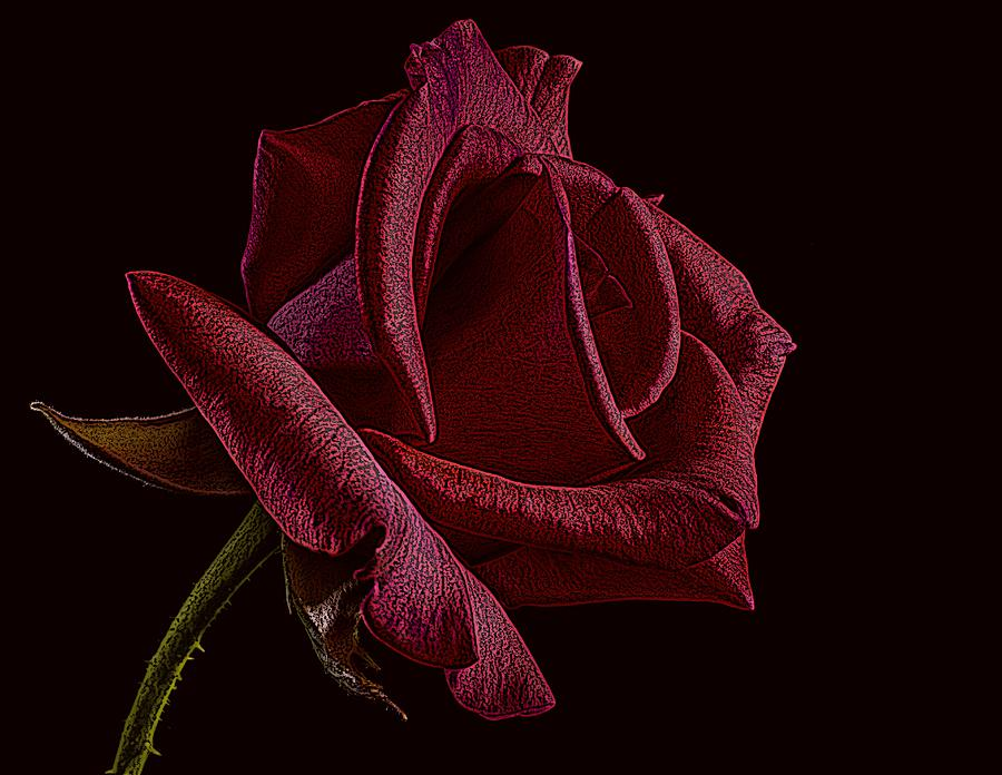 Single Red Rose of Love by David Dehner