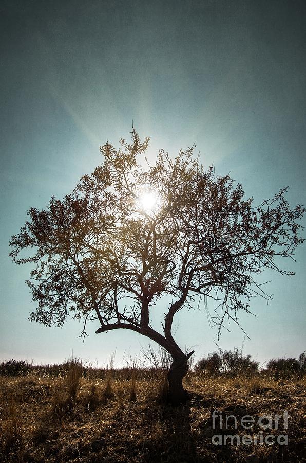 Dark Photograph - Single Tree by Carlos Caetano