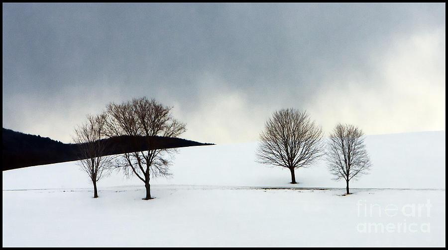 Single trees by Bobbie Turner