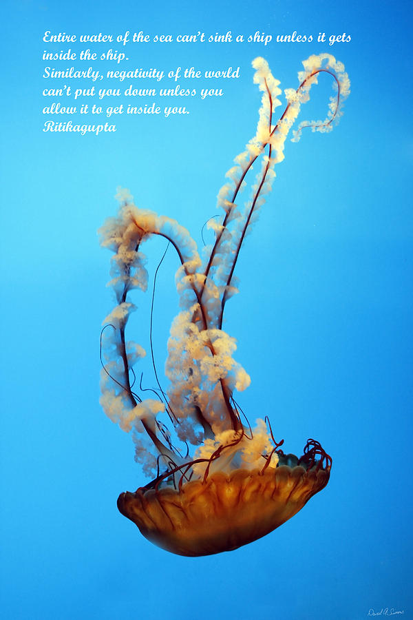 Sea Nettle Photograph - Sinking by David Simons
