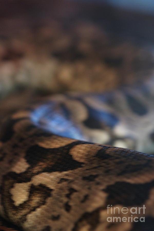 Snake Photograph - Sinti Hilha by Linda Shafer