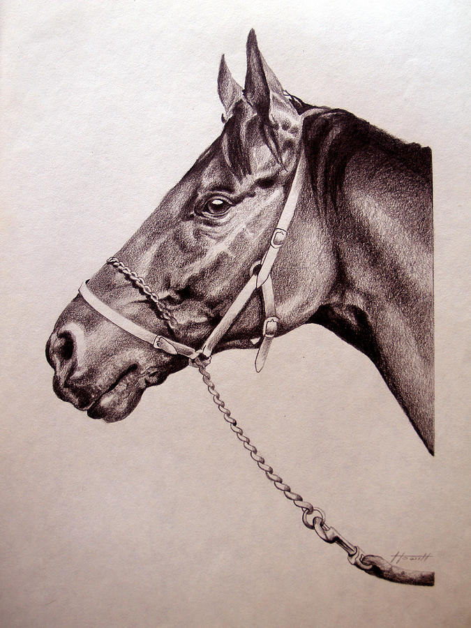 Horse Drawing - Sir Alfred 2 by Patricia Howitt