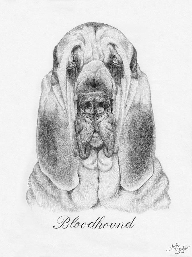 Bloodhound Drawing - Sir Reginald The Bloodhound by Ashe Skyler