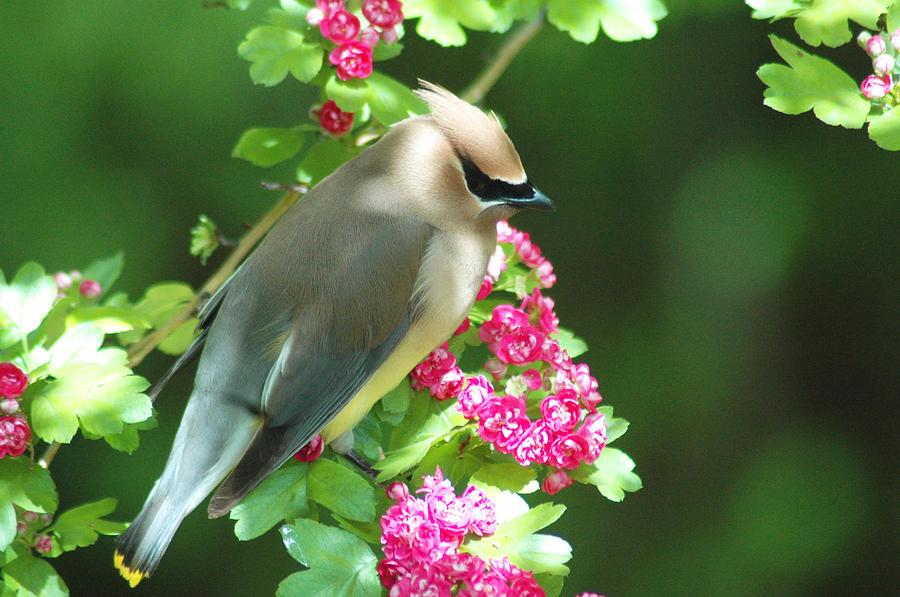 Birds Photograph - Sittin Pretty by Annie Pflueger