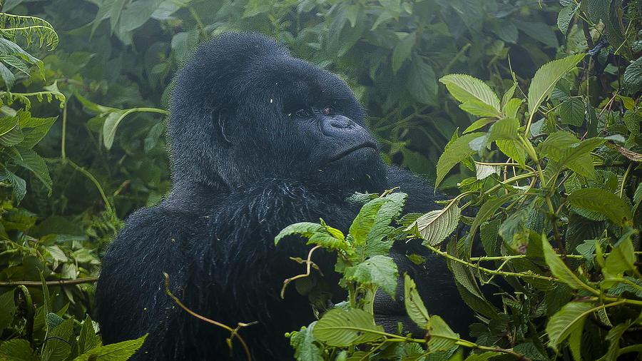 Rwanda Photograph - Sitting Back by Paul Weaver