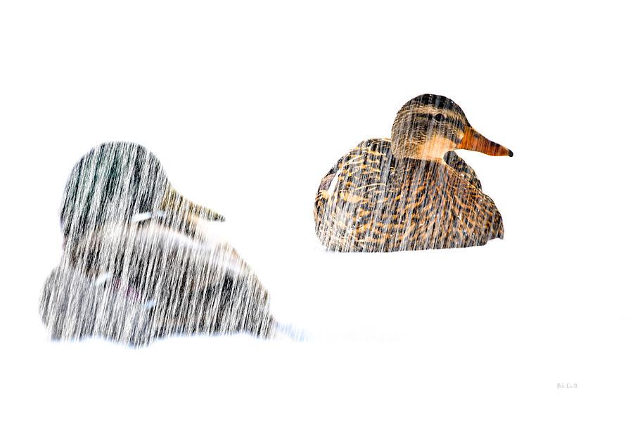 Duck Photograph - Sitting Ducks In A Blizzard by Bob Orsillo