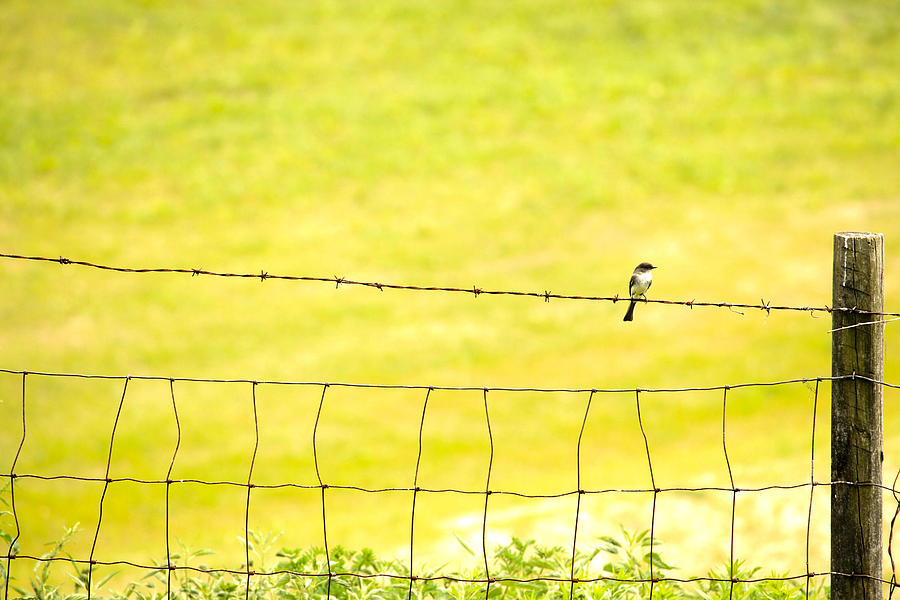 Bird Photograph - Sitting On A Wire by Karol Livote