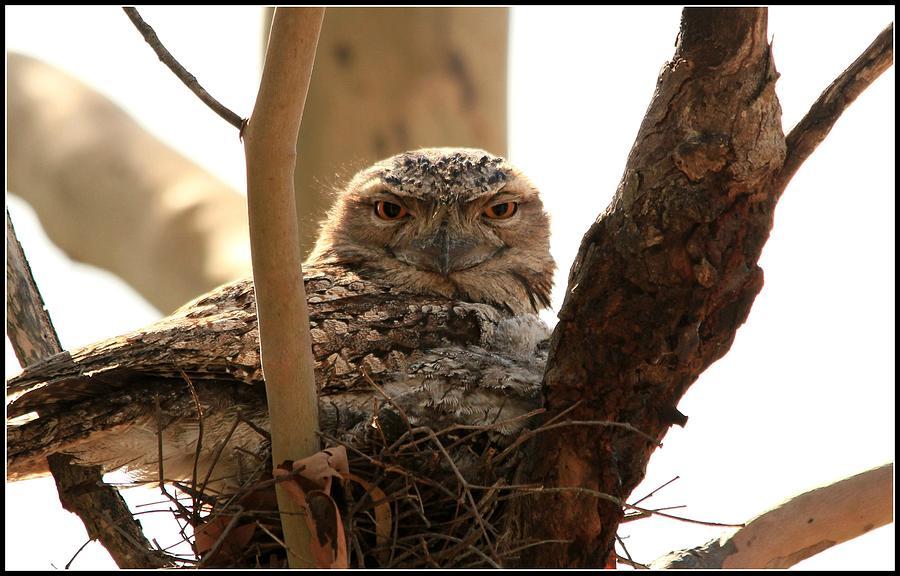 Owl Photograph - Sitting Pretty by Debbie Howden