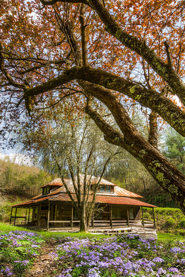 Appalachia Photograph - Sitting Pretty by Debra and Dave Vanderlaan