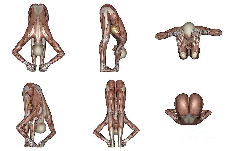 Six Different Views Of Big Toes Yoga Digital Art by Elena Duvernay