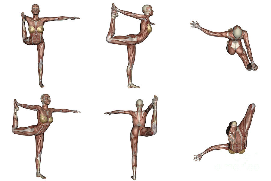 Yoga Digital Art - Six Different Views Of Dancer Yoga Pose by Elena Duvernay