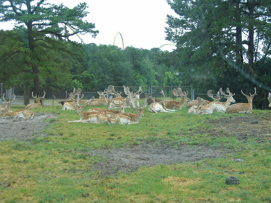 Six Photograph - Six Flags Great Adventure - Animal Park - 121216 by DC Photographer