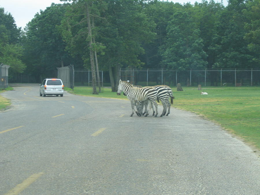 Six Photograph - Six Flags Great Adventure - Animal Park - 121248 by DC Photographer