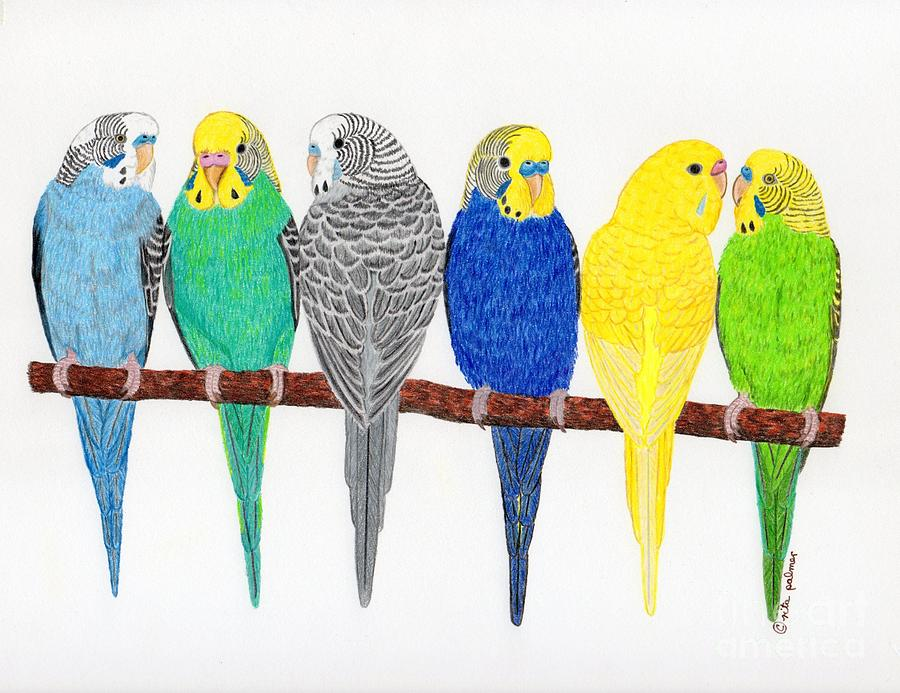 Six Parakeets Drawing By Rita Palmer