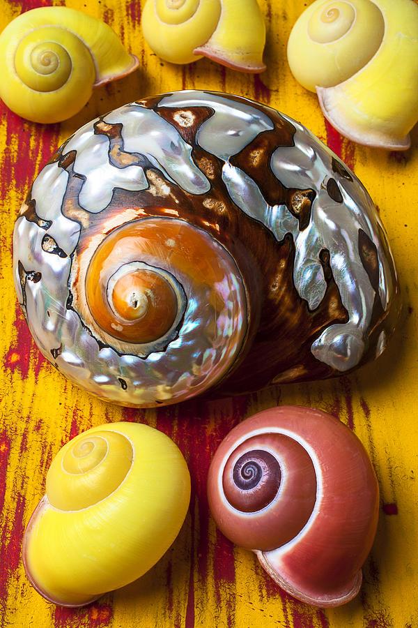 Six Photograph - Six Snails Shells by Garry Gay